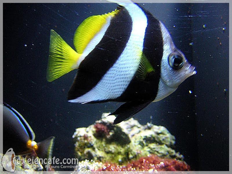 Cattolica Aquarium
